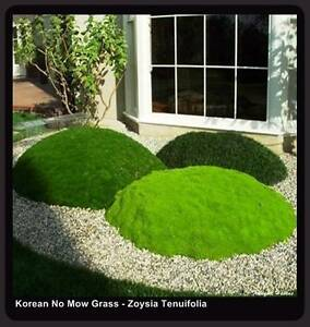No Mow Grass 10 x 100mm Pots $75.00 Inc. Free Express Delivery Brisbane City Brisbane North West Preview