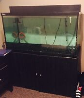125 Gallon Fish Tank, Everything Included