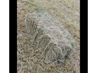 Square bales hay