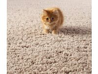 Extremely high standard Carpet Cleaning at affordable prices! Book EOT and you get 10% of Discount!