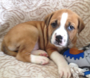 5 Perfect Puppies Looking For There Forever Homes