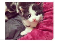 2 adsolutly adorable kittens!