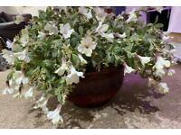 Artificial plants suitable for shop or restaurant