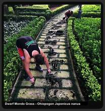 100 Mini  ⁄  Dwarf Mondo Grass $36.00 Free Express Delivery Melbourne CBD Melbourne City Preview