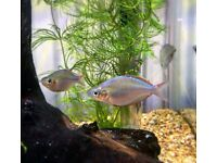 Small size Rainbow Tropical Fishes*Home Delivery*