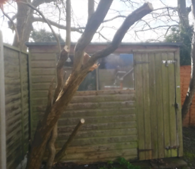 Old wooden Garden shed