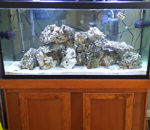 90 GALLON REEF TANK  AND ALL ACCESSORIES