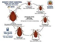 100%Guaranteed 24/7 Pest Control exterminators Bed Bugs Flea Ants Cockroaches Mice Wasps fumigation