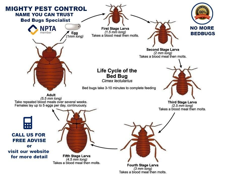 Pest Control Services Removal Extermination Fumigation Get Rid Of Bed Bugs Mice Cockroaches Wasps In Elephant And Castle London Gumtree