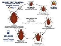 Pest Control Services|Removal| Extermination| Fumigation &Get rid of Bed Bugs Mice Cockroaches Wasps