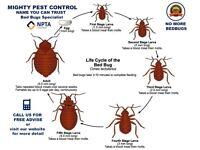 Pest Control Services Mice Rats Bedbugs Ants Cockroaches Flies Flea Extermination in Bermondsey