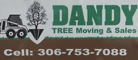 Dandy Tree Moving and Sales Inc.