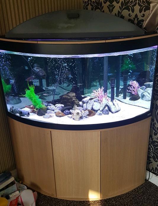 fluval venezia 350 corner fish tank in nelson lancashire gumtree. Black Bedroom Furniture Sets. Home Design Ideas