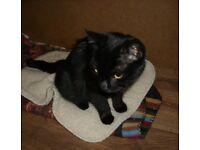 12 months old Kitten