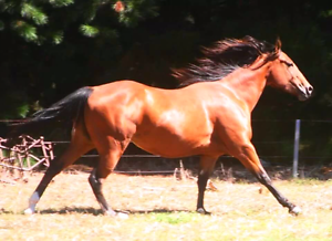 5 year old Quarter Horse mare Ballarat Central Ballarat City Preview