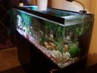 Complete fish tank With a lot of decorations
