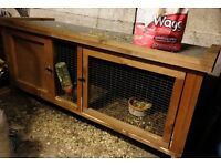 Guinea Pig with House / Cage
