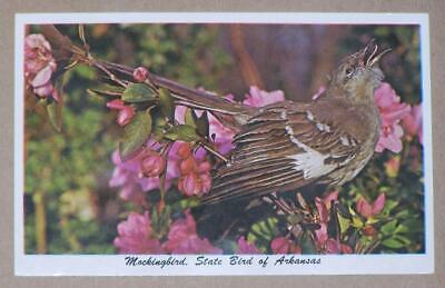 UNUSED 1970'S POSTCARD, MOCKINGBIRD, STATE BIRD OF ARKANSAS
