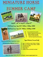 Miniature Horse Summer Camp PEI