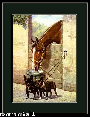 English Picture Print French Bulldog Dog Dogs Puppy Puppies Horse Art Poster
