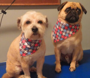 Steph's Dog Grooming- Tavistock