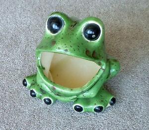 Little Garden Frog