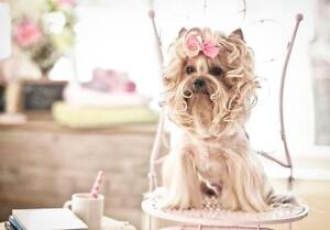 Affordable Mobile Dog Grooming - Stress Free / One on One Grooming / Certified Groomers