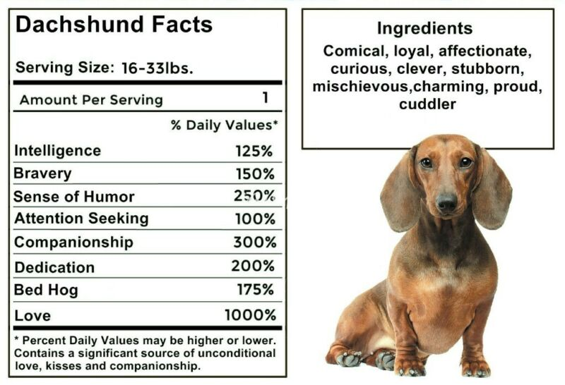 DACHSHUND Facts Magnet