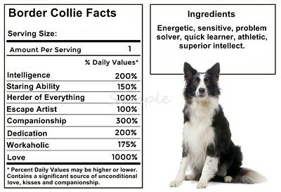BORDER COLLIE Facts LARGE FRIDGE MAGNET