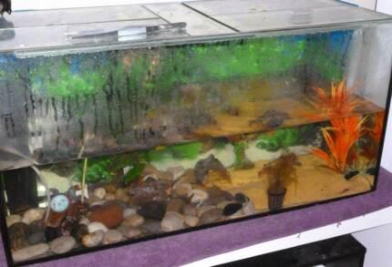150Litre fish tank, table & accessories plus x2 axolotls Melbourne Region Preview