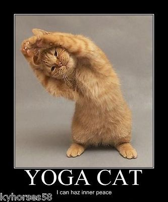 Funny Humor Yoga Cat Refrigerator Magnet