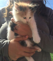 FREE 2 month old kittens