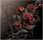 poison-rose2019