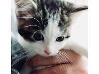 Cute kittens ready