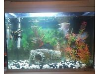 Fish tank with fish and accessories.