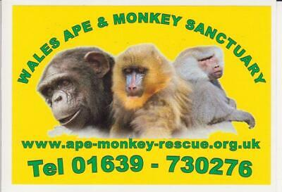 Wales Ape & Monkey Sanctuary