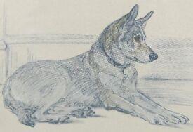 8ff7ee0a5dbb German Shepherd lithograph by Lucy Dawson c.1930