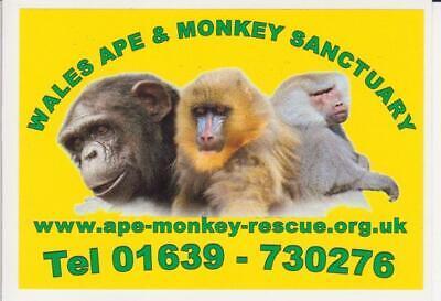 Wales Ape & Monkey Sanctuary