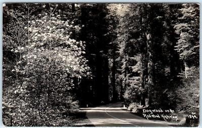 RPPC  REDWOOD HIGHWAY, California  CA   DOGWOOD Trees  Patterson 1849 (Dogwood Ca)