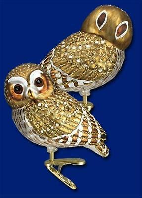 Pygmy Owl Old World Christmas Glass Owl Bird On Clip Nature Ornament Nwt 18067