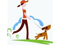 Sarah's Dog Walking Service