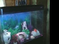 3.4 FT FISHTANK WITH BLACK MATCHING CABINET IN EXCELLENT CONDITION (BARGAIN)