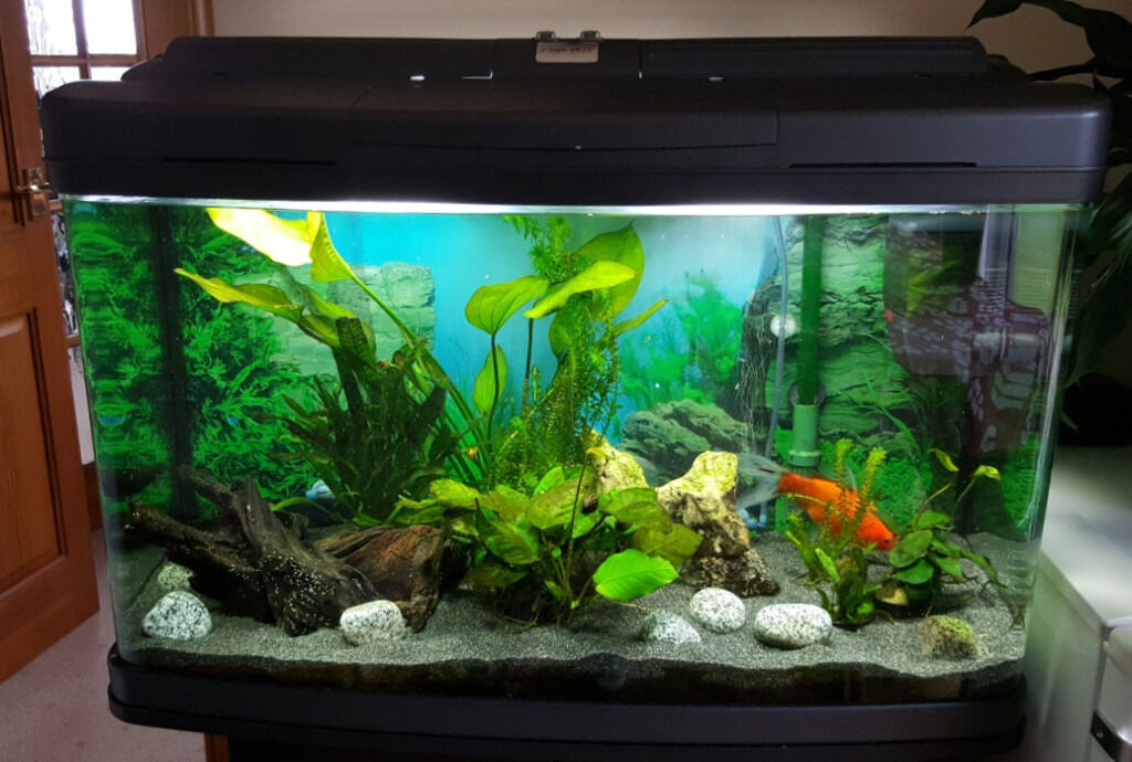 120 litre tropical or coldwater fish aquarium cabinet and accessories in peterhead. Black Bedroom Furniture Sets. Home Design Ideas