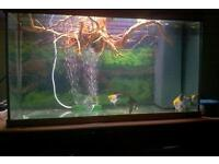 125l jewel aquarium