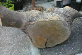 London plane lacewood for carving or turning