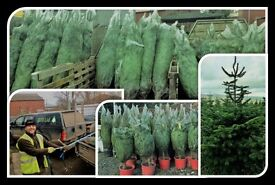 REAL CHRISTMAS TREES FOR SALE - great quality, great prices and great cause!