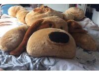 Large cuddly dog