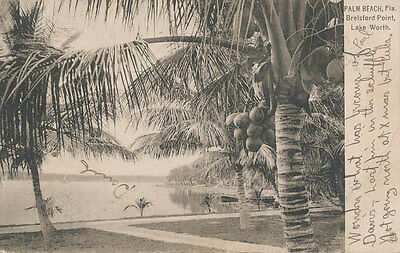 Palm Beach Fl   Breisford Point Lake Worth 1907   Raphael Tuck Series