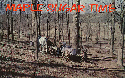 Somerset Maple Collection - Somerset Co. PA * Maple Sugar Time ca 1960 * Horse Drawn Wagon