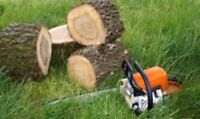Abattage d'arbre/ tree cutting / pruning